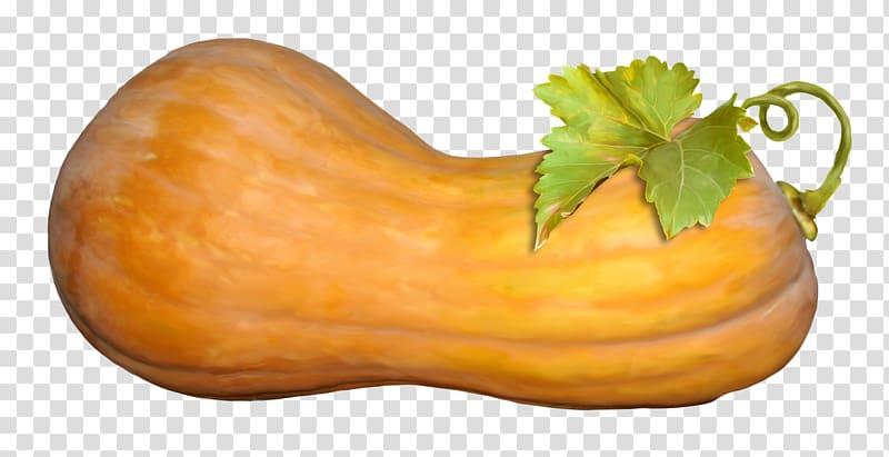 Butternut squash calabaza cucurbita. Zucchini clipart gourd