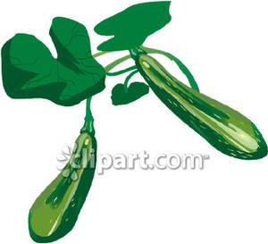 Zucchini clipart zucchini plant. A royalty free picture