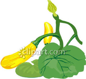 Collection of free download. Zucchini clipart zucchini plant