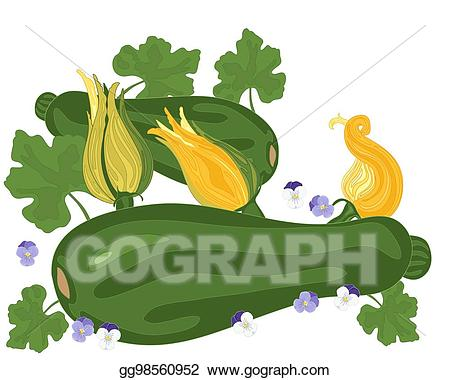 Vector stock courgette and. Zucchini clipart zucchini plant