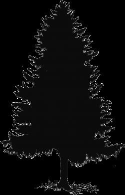 Cedar Tree Silhouette Clip Art Cedar tree drawing - clipart | trees ...