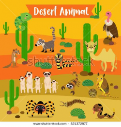 Image result for what animals live in the desert habitat usa ...