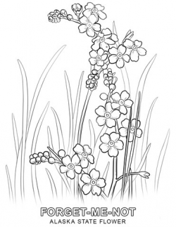 Alaska State Flower coloring page | Free Printable Coloring ...