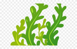 Seaweed Clipart Animated - Seaweed Clipart Clear Background ...