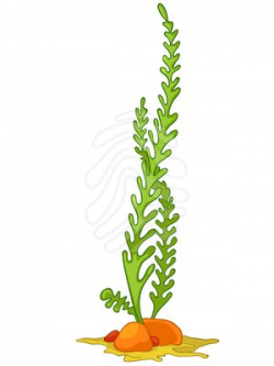 Algae 20clipart | Clipart Panda - Free Clipart Images