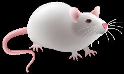 Mouse PNG Clip Art - Best WEB Clipart