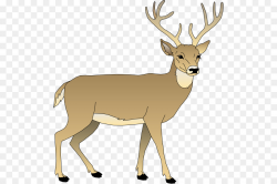 White-tailed deer Clip art - Bay Cliparts Animated png download ...
