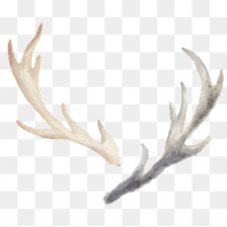 Watercolor Antler Png, Vectors, PSD, and Clipart for Free Download ...
