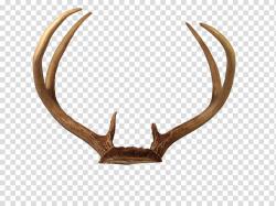 Brown antler illustration, Reindeer Horn Antler, Deer ...