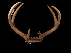 Transparent Deer Antlers PNG | PNG Mart