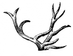 Vintage Images - Deer - Antlers - Dogs - The Graphics Fairy