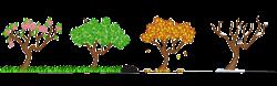 Image - C5bb7e8edcf0bae6667fc9f5604406db free-seasons-clip-art-tree ...