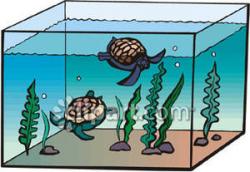 Aquarium clipart pet turtle - Pencil and in color aquarium clipart ...
