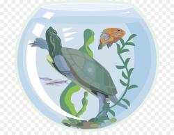 Sea turtle Aquarium Pet Clip art - fish tank png download - 750*684 ...