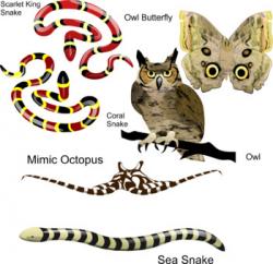 Animal Mimicry Clipart by Studio Devanna | Teachers Pay Teachers