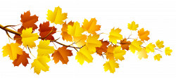 Branch with Autumn Leaves PNG Clipart | Gallery Yopriceville - High ...