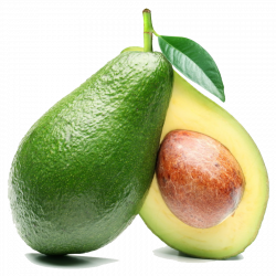 Download Avocado Free PNG photo images and clipart | FreePNGImg