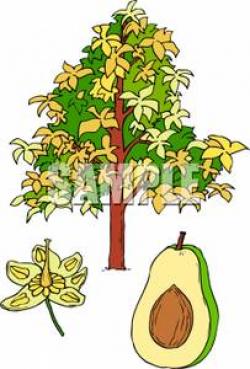 Clip Art Image: An Avocado and an Avocado Tree