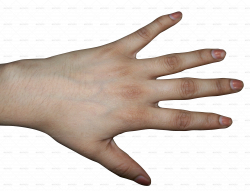 Human hand textures | Clipart Panda - Free Clipart Images