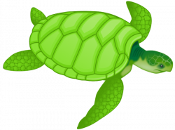 Free Turtle Clipart and Animations