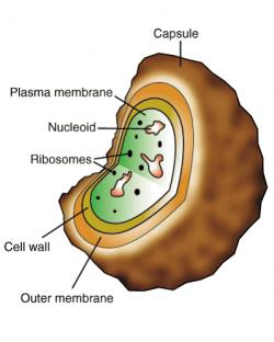 Archaebacteria and Eubacteria - LifeProcessesAlexiB