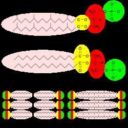 Archaea - Wikiwand