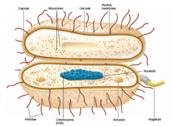Similarities Between Eubacteria and Archaebacteria ~ Biology Exams 4 U