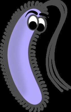 Bacteria (Prokaryote) Cell Coloring