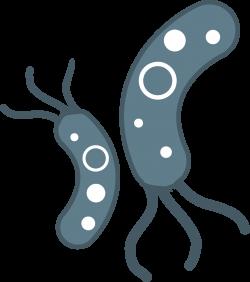 Bacteria PNG HD Transparent Bacteria HD.PNG Images. | PlusPNG