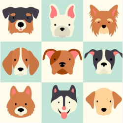 Dogs by #noah88. Find it at cstm.io/80 #dogs #dog #husky #puppy ...