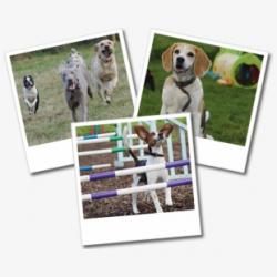 Dog Beagle Clipart Png - Dog Clip Art #1273003 - Free ...