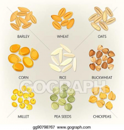 Vector Clipart - Bean and grains of seasonal plant, seed ...