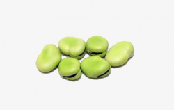 Green Beans, Broad Bean, Green, Produce PNG Image and Clipart for ...