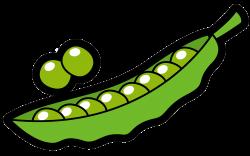 Snow pea Vegetable Clip art - A pea 2075*1300 transprent Png Free ...