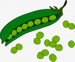 Vector Peas, Pea, Beans, Vector Free Download PNG and Vector for ...