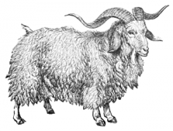 Free Bearded Goat Clipart, 1 page of free to use images