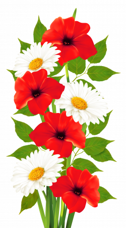 Poppies and Daisies Transparent PNG Clipart | Frames & Cards ...