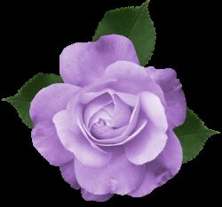 Image - Purple-rose-clipart-transparent-background-7.png | Animal ...