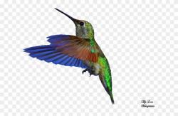 Google Search Bee Hummingbird, Hummingbird Photos, Clipart ...