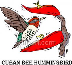 Labeled Cuban Bee Hummingbird - Royalty Free Clipart Picture