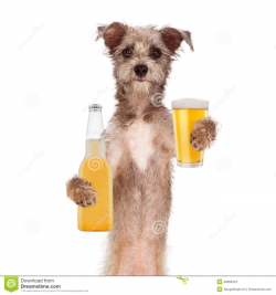 Dog drinking beer clipart collection