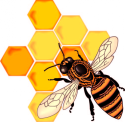 Honeycomb clipart honey - Pencil and in color honeycomb clipart honey