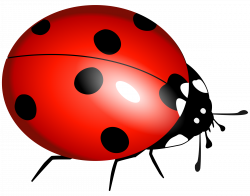 Ladybug Flying Clipart | Clipart Panda - Free Clipart Images ...