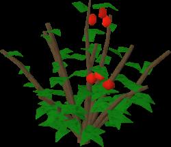 Redberry bush | RuneScape Wiki | FANDOM powered by Wikia