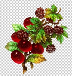 Fruit Blackberry PNG, Clipart, Berries, Berry, Blackberry ...