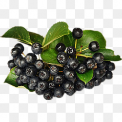 Berries PNG Images | Vectors and PSD Files | Free Download on Pngtree