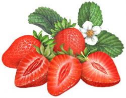 36 best Berry Illustrations for Packaging images on Pinterest ...