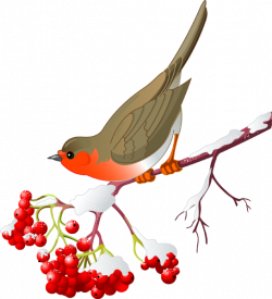 Pretty Bird and Winter Berries | Pretty birds, Bird clipart and Clip art