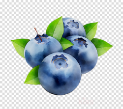Fruit Tree clipart - Blueberry, Fruit, Plant, transparent ...