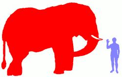 African Bush Elephant – The World's Biggest Land Animal! « Big Animals